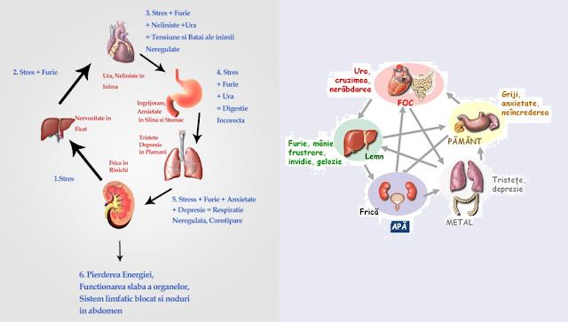 Legătura dintre organe şi emoţii