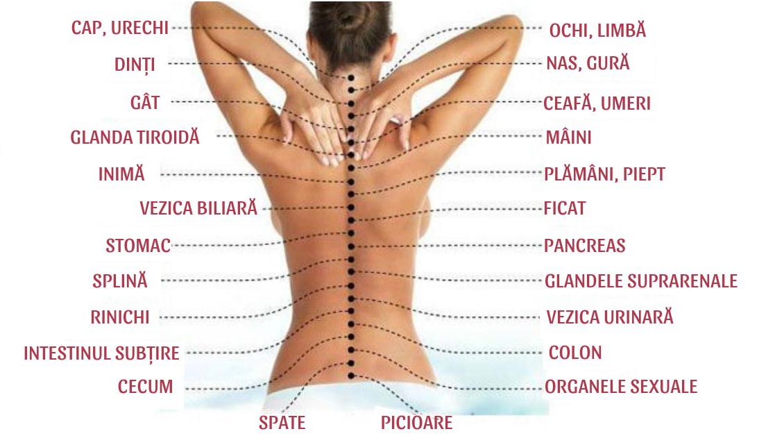 Legătura vertebre și organele